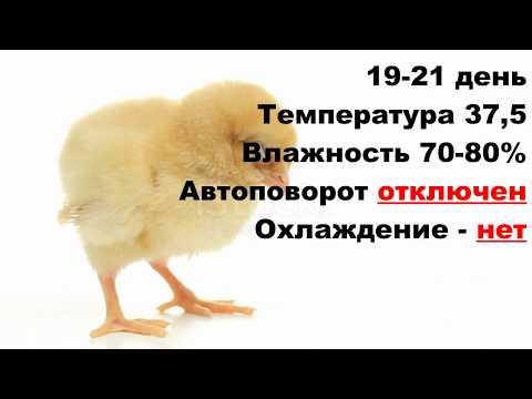 Лучший режим инкубации куриных яиц в бытовом инкубаторе �� Таблица инкубации цыплят �� Инкубация кур