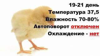 Лучший режим инкубации куриных яиц в БЫТОВОМ инкубаторе / Таблица инкубации цыплят