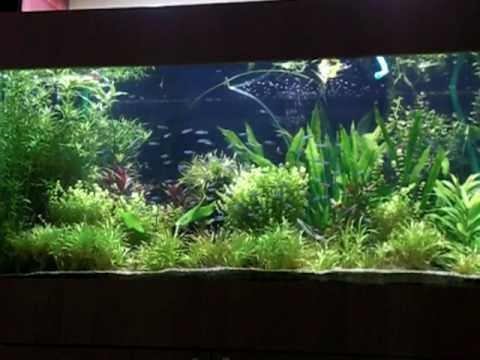 Aquarium 600l co2 youtube for Aquarium 600l
