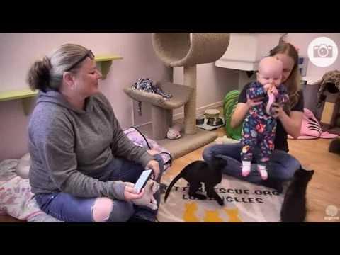 Nina Interviewed by Jellee - Kitten Rescue, LA Q&A