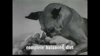 1960's Gravy Train Commercial