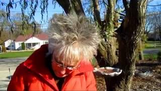 Elephant Ears Update - Wisconsin Garden Video Blog 345
