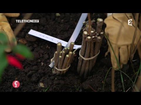 [JARDINAGE] Comment réussir vos boutures sur bois sec #CCVB