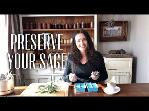How to Preserve Sage by Dehydrating & Sage Butter Recipe to Freeze