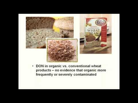 Wheat Mycotoxins in Organic Grain Systems