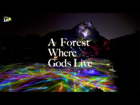 teamLab: A Forest Where Gods Live(2020)