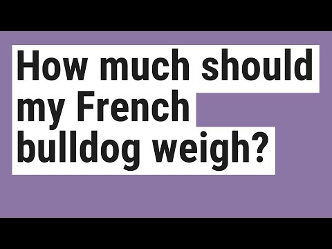 How Much Should My French Bulldog Weigh?