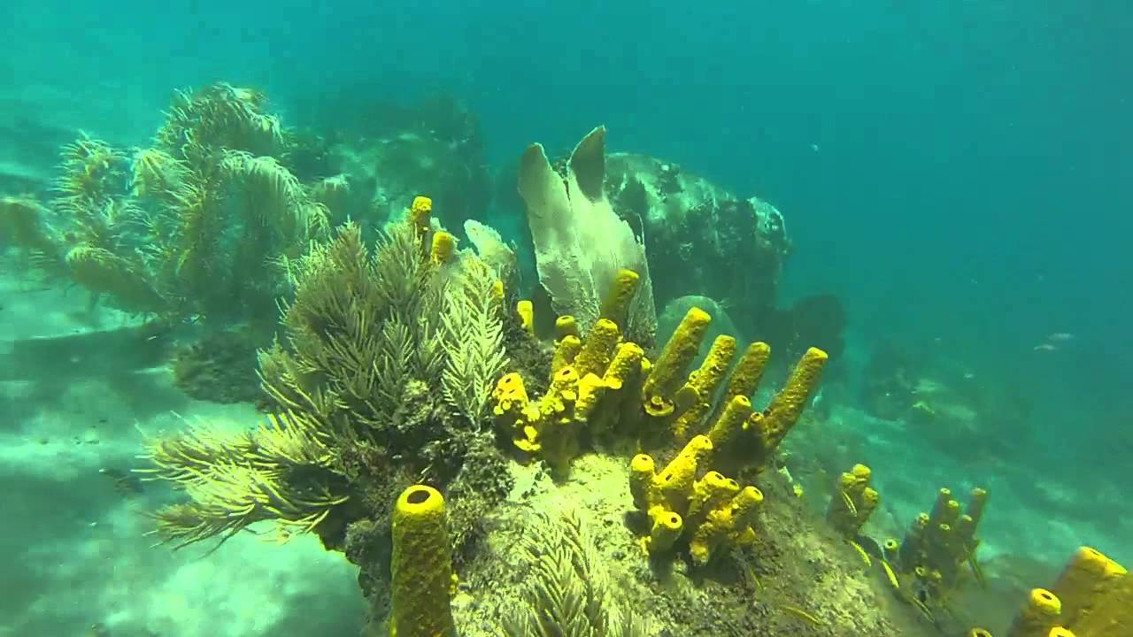 Snorkeling At Anse Chastanet North End St Lucia Feb 21st