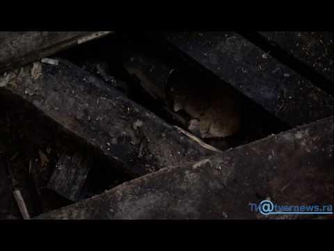 Последствия страшного пожара на улице Горького в Твери