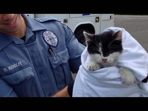 Cop Rescues Cat On Busy Bridge After Being Tossed Out Car Window