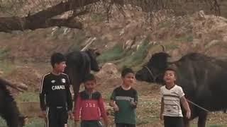اطفال عراقيون يهوسون على قاسم سليماني