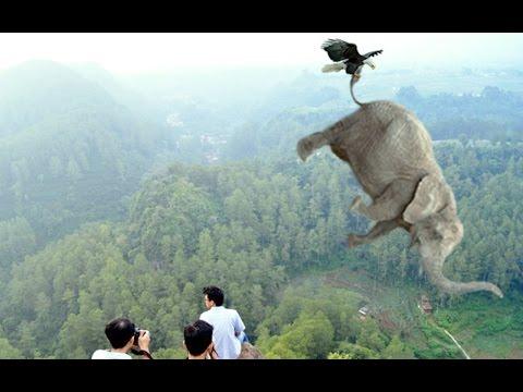 Sungguh Hebat Cara Burung Elang Memburu Mangsanya