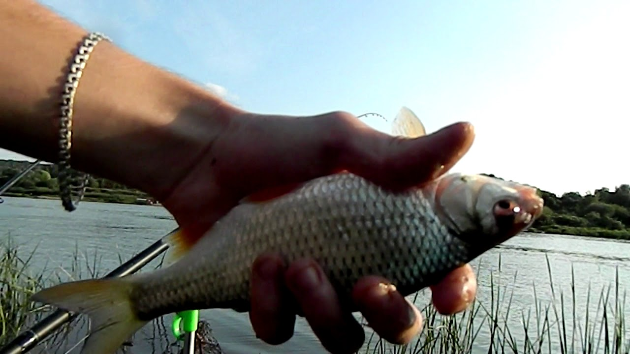 рыбалка осенью на оке видео