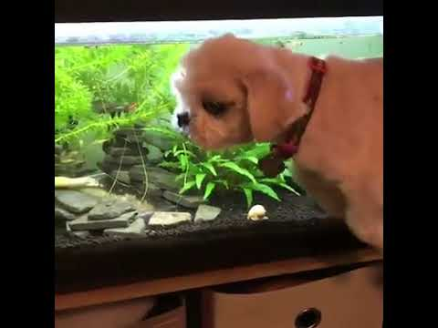 Something Funny 😂😂 The swimming Dog :-) Thanks AKVARYUM GÜNLÜĞÜ