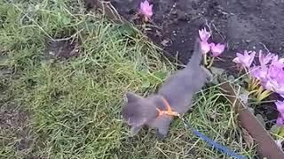 Первая прогулка кота