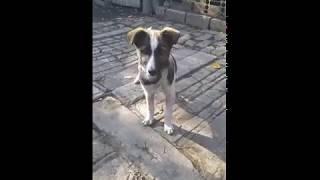 Мой пес БАРОН