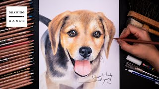 Drawing Puppy, Don't buy it. Adopt it (사지말고 입양하세요) [Drawing Hands]