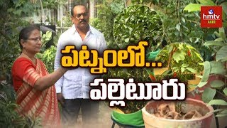 Terrace Gardening - Pinnaka Padma Success Story | Hyderabad | hmtv Agri