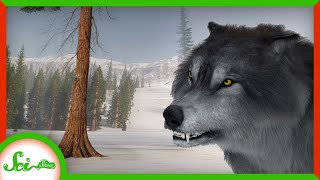 Dire Wolves Were Real! But Not Wolves