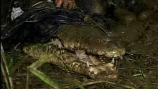 (4) El Cocodrilo que comía Dinosaurios - SuperCroc