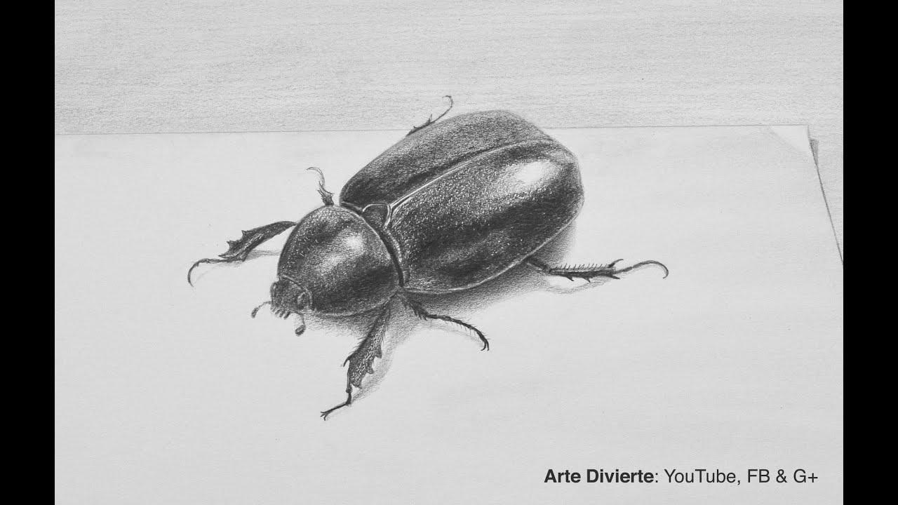 Dibujos De Insectos Para Colorear: Cómo Dibujar Un Escarabajo A Lápiz En 3D