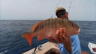 Bimini Bahamas Fishing For Snapper and Grouper Offshore
