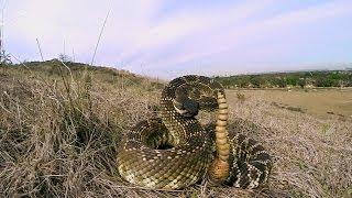 GoPro: Rattlesnake Wranglers
