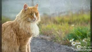 Коты-Воители в реальной жизни!😻😻😻