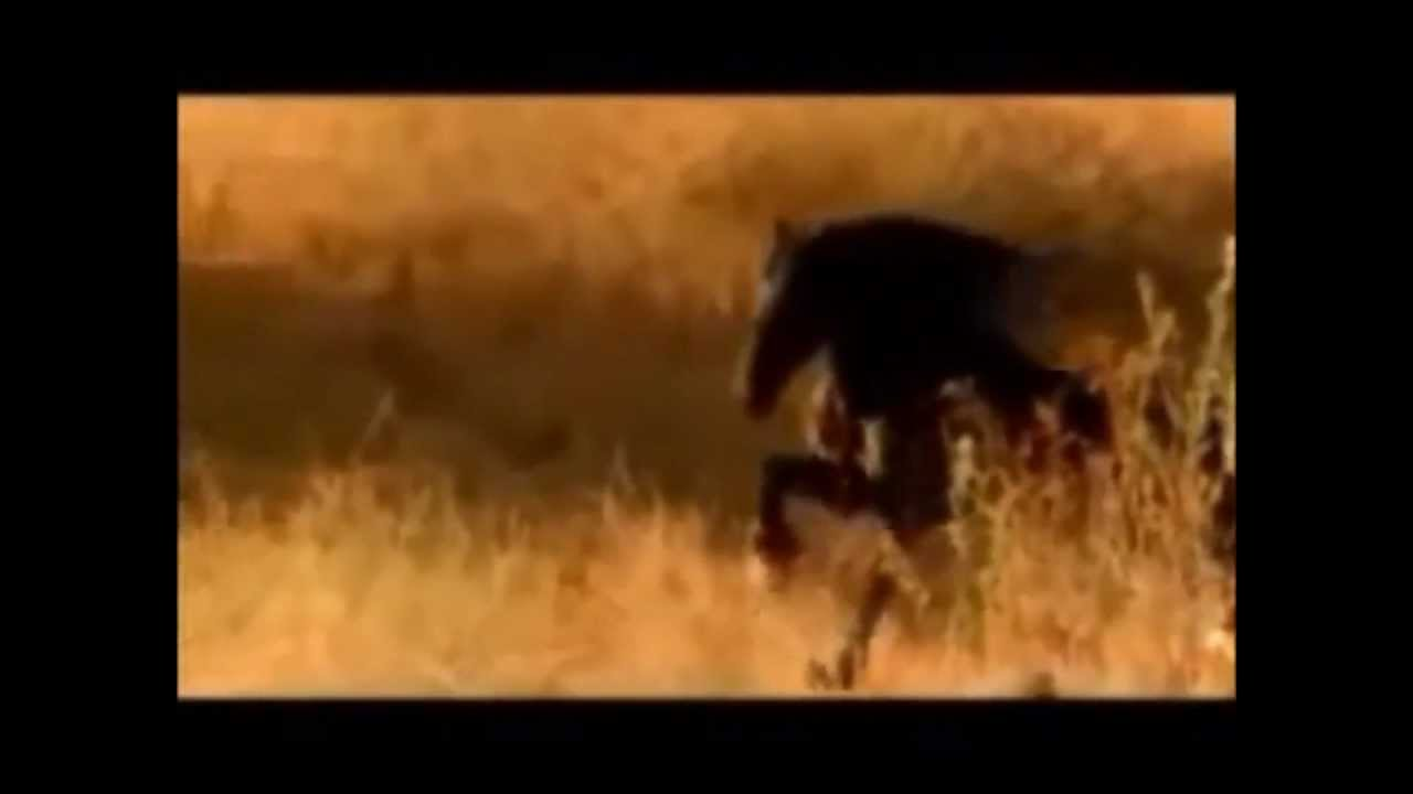 Mano Lima Canto Pro Meu Cavalo Frases De Músicas Gaúchas