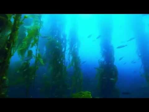 SCUBA Diving Santa Monica Bay