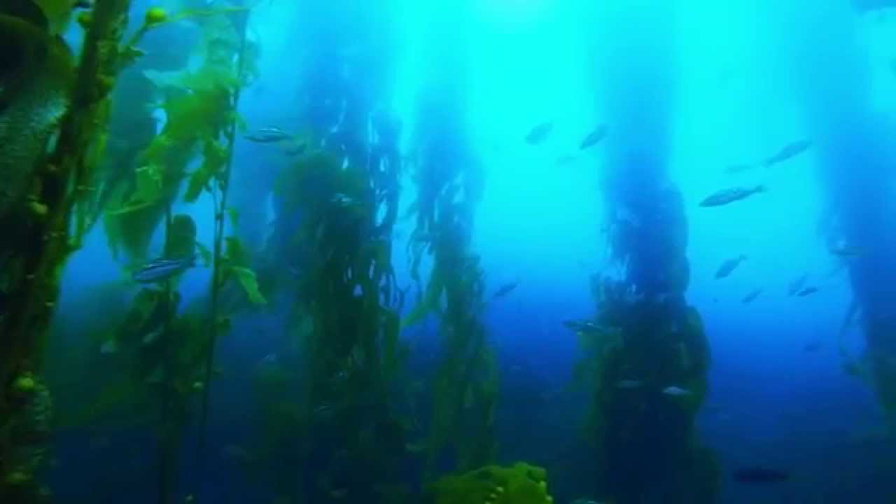 Santa Monica Bay Diving & Fishing Log