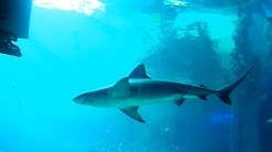 Texas State Aquarium Corpus Christi, Texas 2018