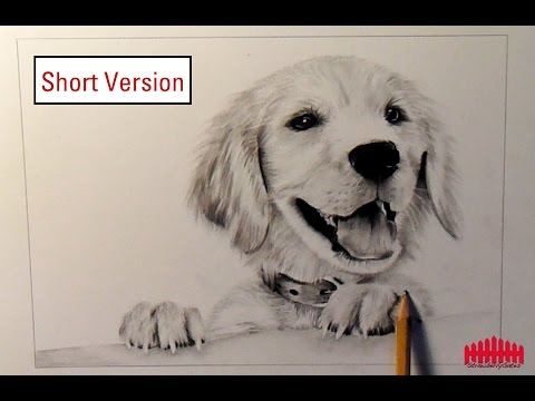 Pencil Drawing Dog 1 How To Draw Fur Short Version