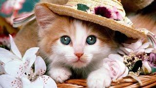 1 марта День Кошек в России!