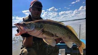 ОГРОМНЫЙ СУДАК В РУСЛОВЫХ КОРЯГАХ!!! Трофейная рыбалка 2019джиг, тест эхолота Гармин, fishing