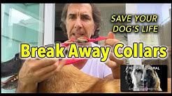 BreakAway Collars for your Dog's Safety - Dog Training & Safety