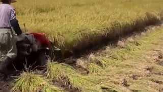 Reaper cum Binder Rice Paddy Wheat Burdwan West Bengal