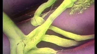 Der Mensch: Gehirn und Nervensystem
