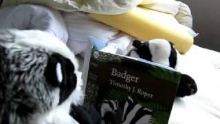 Badger porn