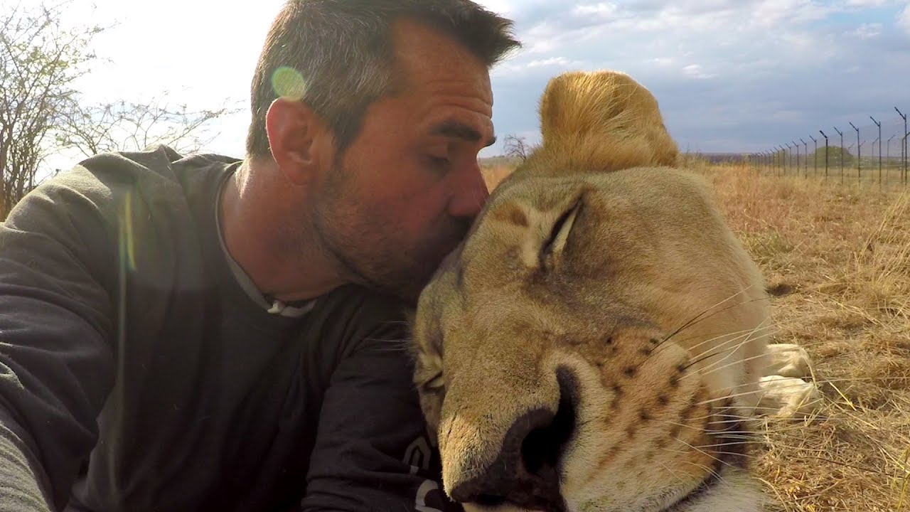 American Tourist Killed By Lion Kevin Richardson The Lion Whisperer Responds