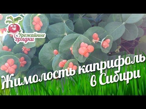 фото цветов плоды