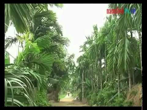 Xã Hải Đường - Huyện Hải Hậu - Tỉnh Nam Định