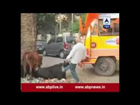 VIRAL VIDEO: VHP workers kick Holy cows..pull their ears to find way for late Ashok Singhal's  yatra