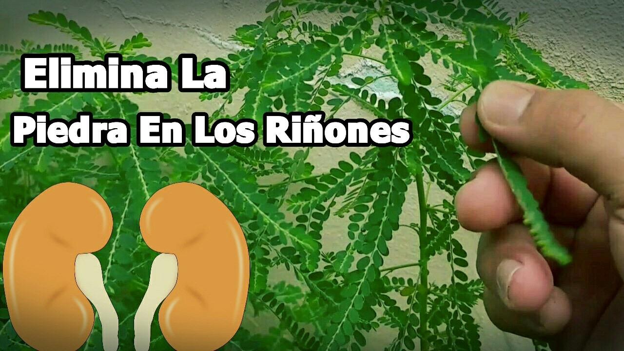 Plantas medicinales para eliminar piedras en los rinones