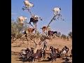 Thế Giới Động Vật - Khoảnh khắc hài hước của động vật