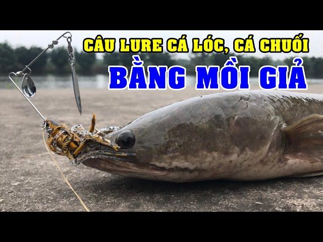 CÂU LURE CÁ LÓC | Câu cá Lóc cá chuối bằng mồi giả theo kiểu bát nháo thập cẩm vẫn vui