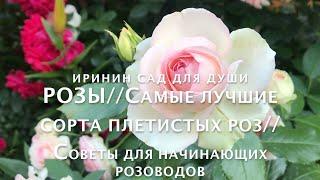 РОЗЫ//Самые лучшие сорта плетистых роз//Советы для начинающих розоводов