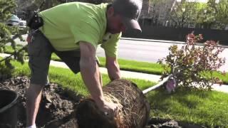 Plant a Tree with Nick's Garden Center & Farm Market in Aurora CO