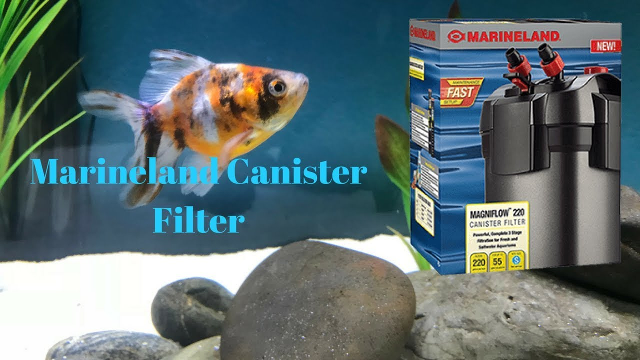 cleaning the marineland canister filter youtube