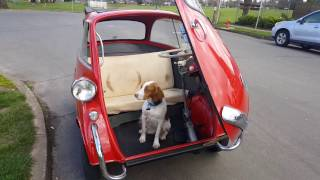 Doggie Day Isetta